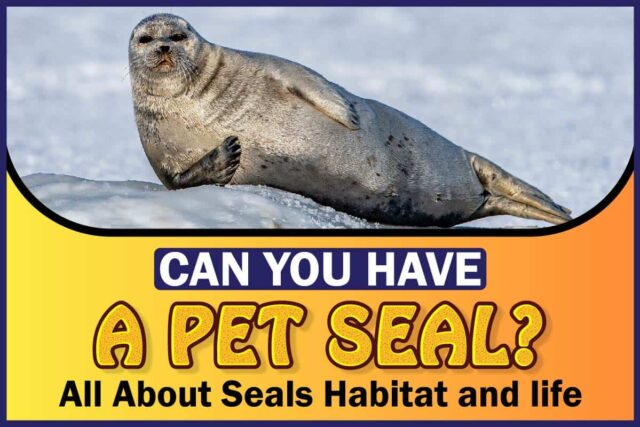 Can You Have A Pet Seal