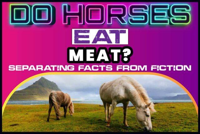 Do Horses Eat Meat