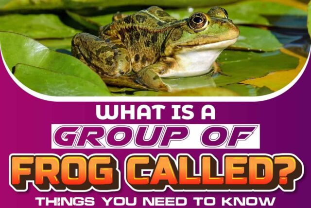 What Is A Group Of Frog Called